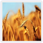 Farm Manager Android App