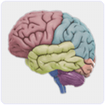 3D Brain Android App