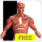 Visual Anatomy free Android App
