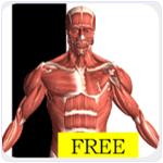 Visual Anatomy free Android App